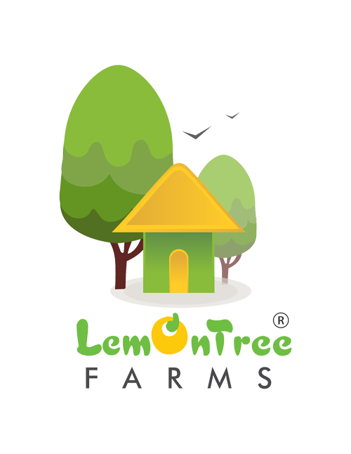 Let's Build : Lemontree Mudhouse | Build Your Own Earth