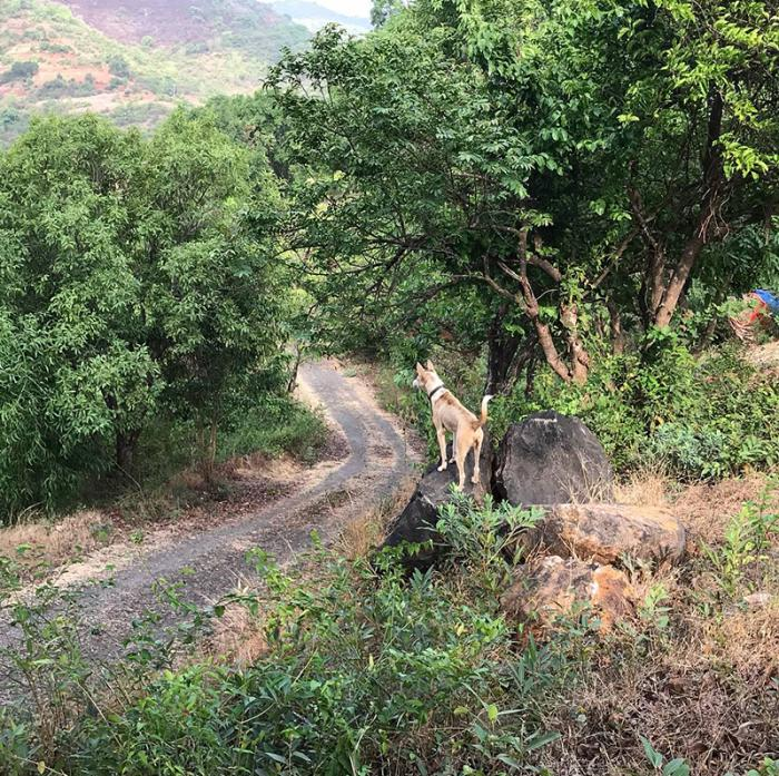 Road-to-Lemontree-Mudhouse