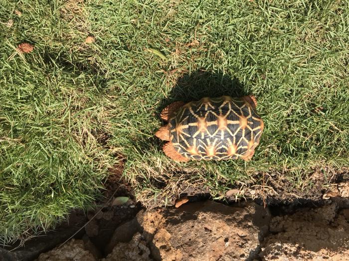 tortoise 3 - 1